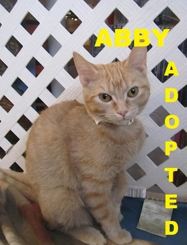 Abby - Adopted - February 15, 2018  with Ray Donovan