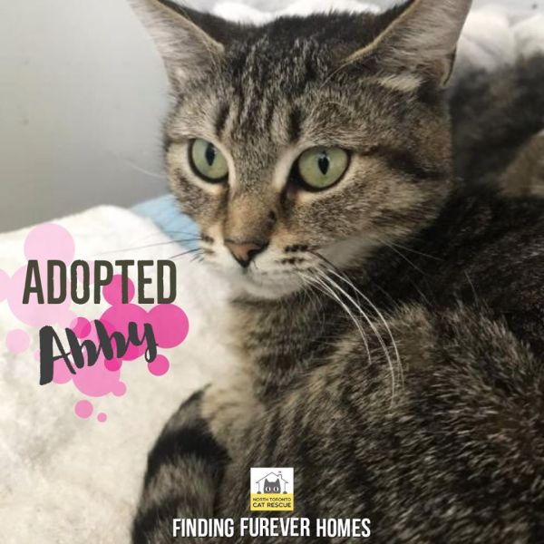 Abby-Adopted-on-April-25-2020-with-Sparky