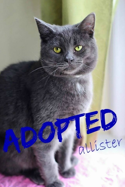 Alister - Adopted - June 5, 2017