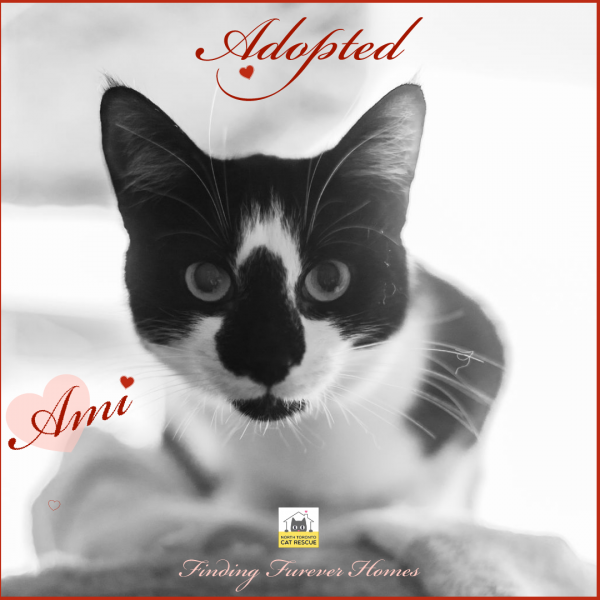 Ami-Adopted-on-June-15-2019