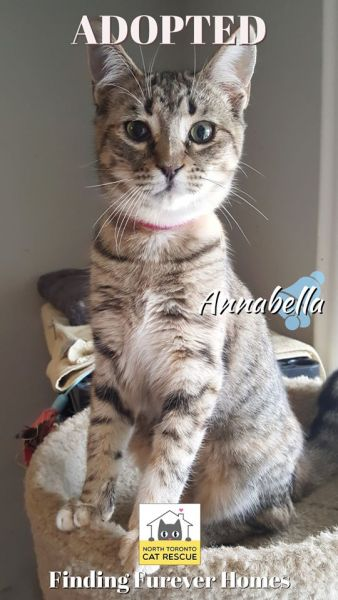 Annabella-November-16-2019-with-Rusty