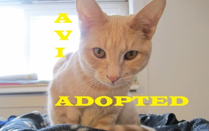 Avi - Adopted - February 10, 2018 - with Mickey