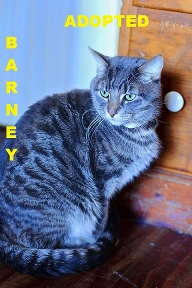 Barney - Adopted - March 22, 2018