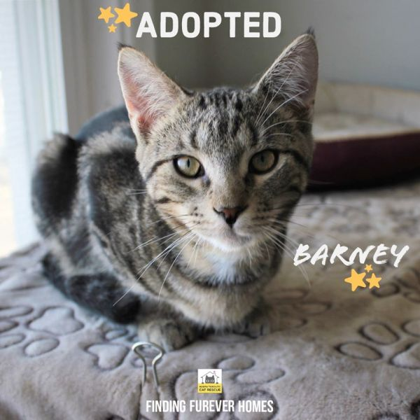 Barney-Adopted-on-April-8-2020-with-Rosie