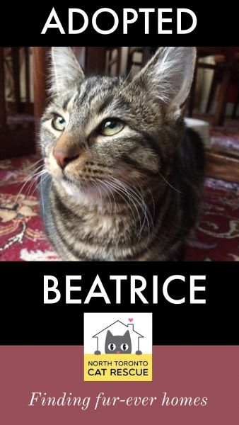 Beatrice-Adopted-on-March-24-2019