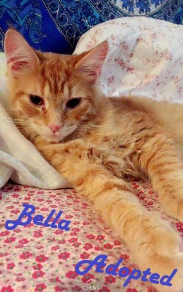 Bella - Adopted - August 25, 2017