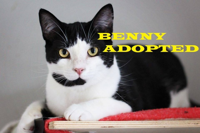 Benny - Adopted - January 24, 2018