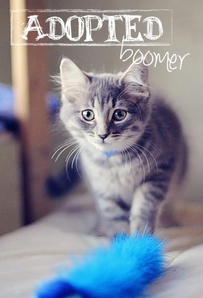 Bommer4