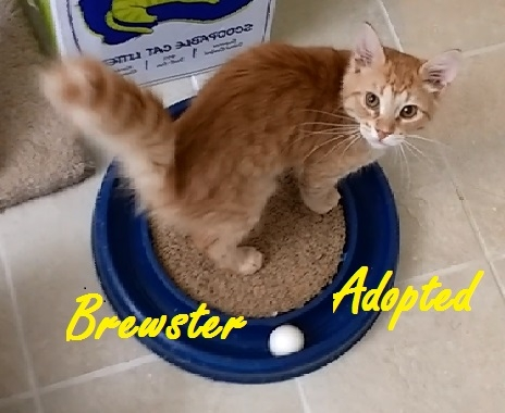 Brewster - Adopted - August 28, 2017