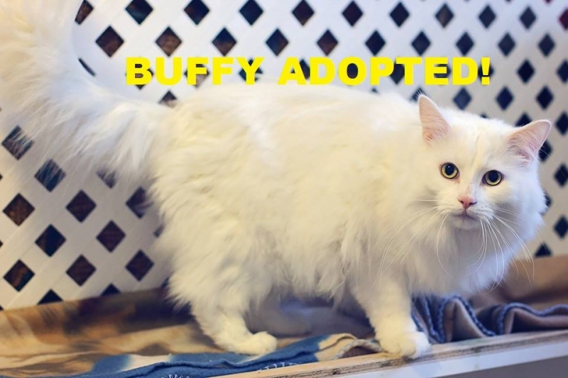 Buffy - Adopted - April 7, 2018 with Tabitha