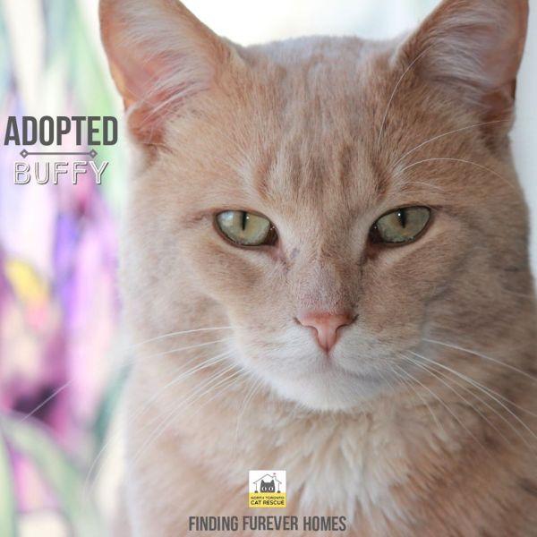 Buffy-Adopted-on-May-3-2020