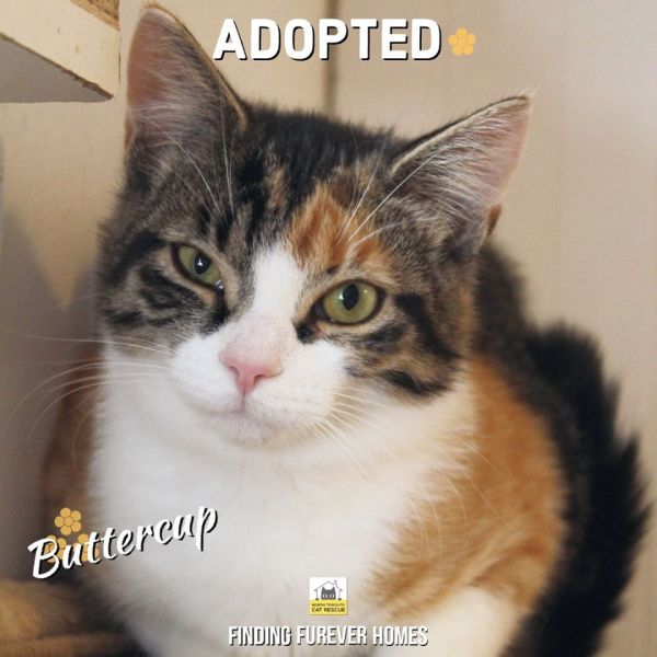 Buttercup-Adopted-in-2020-with-Sylvester