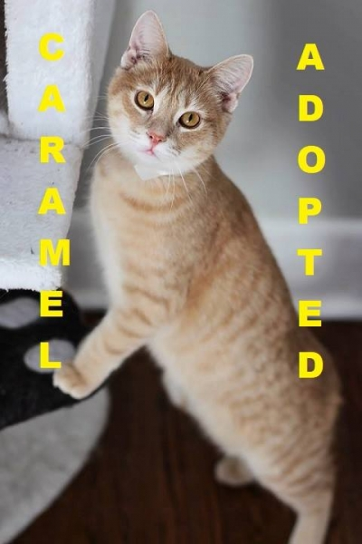 Caramel - Adopted - March 10, 2018 with Krispie