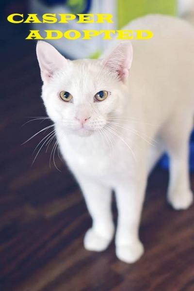Casper - Adopted - September 9, 2018
