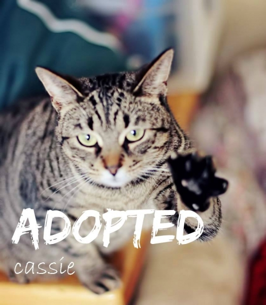 Cassie - ADOPTED - January 29,2017