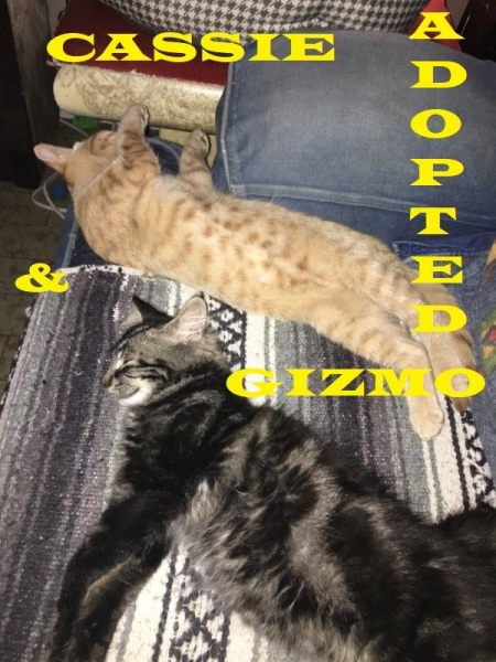 Cassie & Gizmo Adopted on Sep 24, 2018