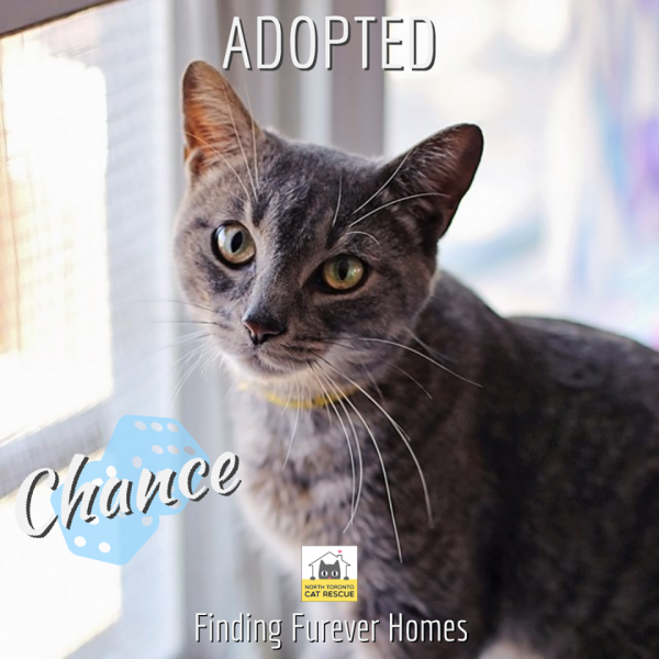 Chance-Adopted-on-September-28-2019