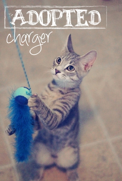 Charger4