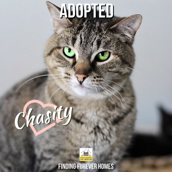 Chasity-Adopted-on-October-5-2019