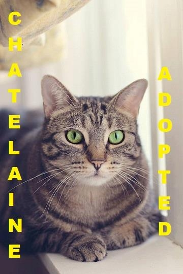 Chatelaine - Adopted - February 3, 2018