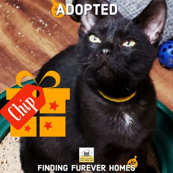 Chip-Adopted-on-December-21-2019-with-Fletcher