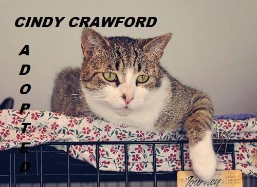 Cindy Crawford - Adopted - December 16, 2017