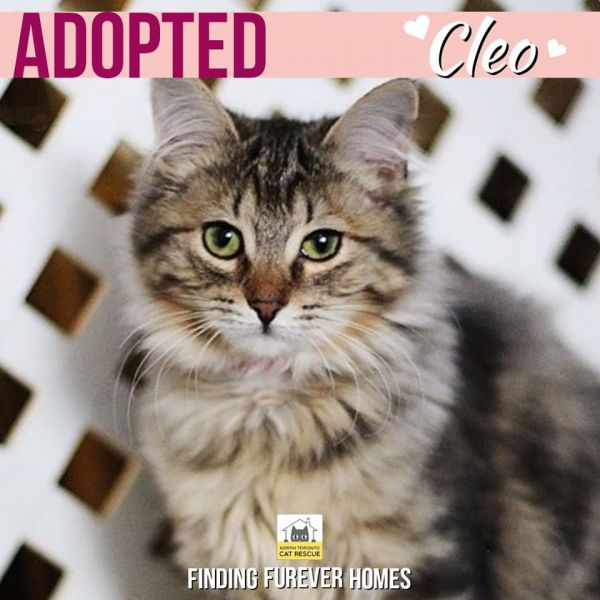 Cleo-Adopted-on-February-9-2020-with-Fonzie