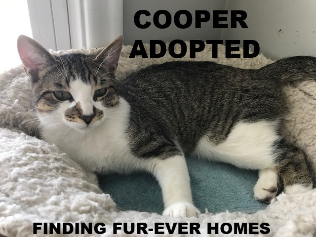 Cooper-Adopted-on-June-20-2020