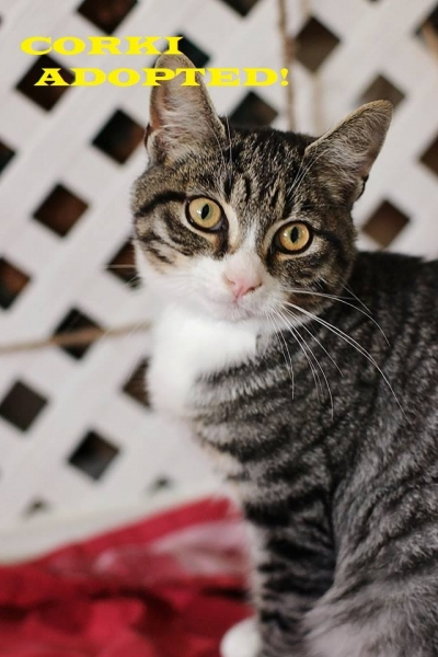 Corki - Adopted on January 26, 2019