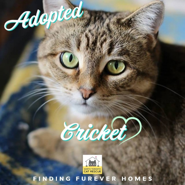 Cricket-Adopted-on-April-7-2019