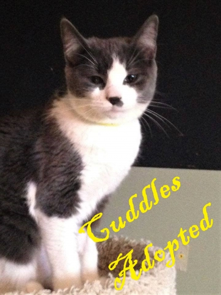 Cuddles - ADOPTED - February 18,2017