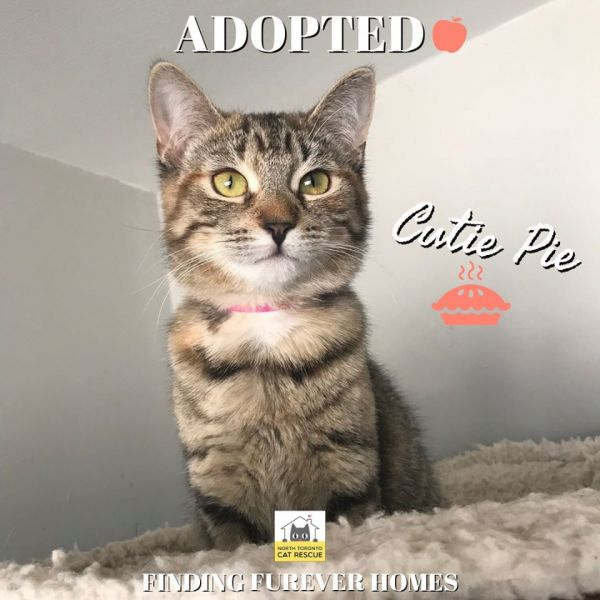 Cutie-Pie-Adopted-on-March-7-2020-with-Apple-Pie