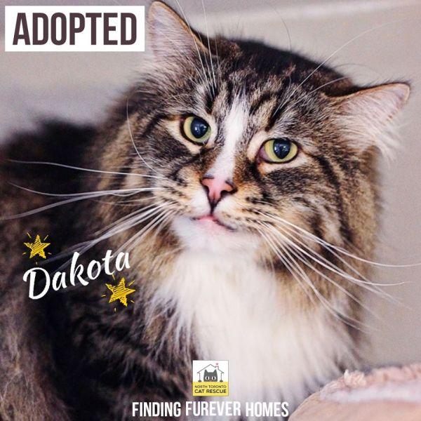 Dakota-Adopted-on-January-11-2020