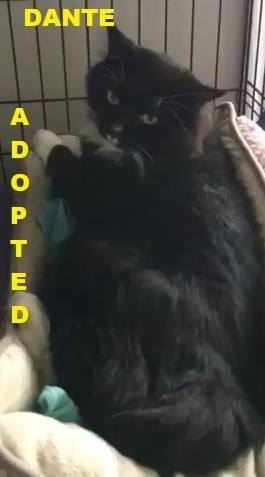 Dante - Adopted - November 23, 2017 with Ruggles