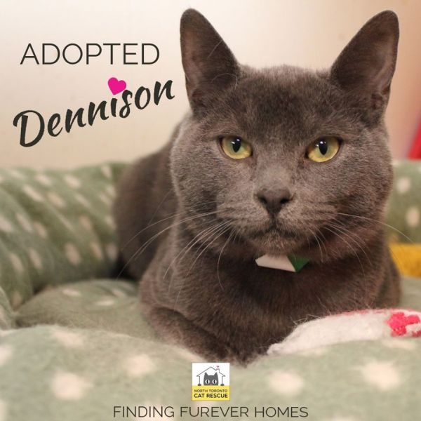 Dennison-Adopted-on-April-4-2020-with-Luna