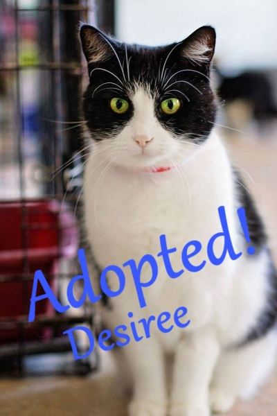 Desiree - Adopted - August 7th, 2017