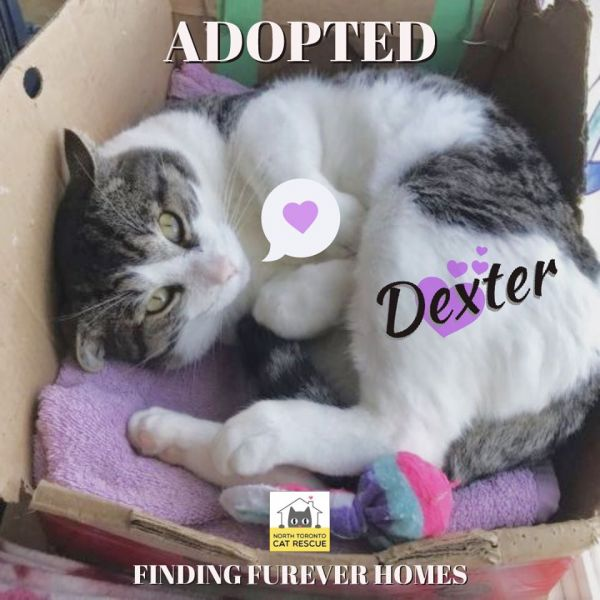 Dexter-Adopted-on-November-24-2019-with-Gigi