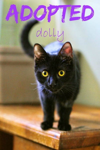 Dolly - ADOPTED - March 29,2017