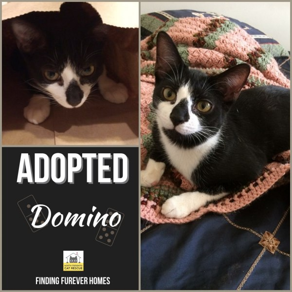 Domino-Adopted-on-June-8-2019-with-Lily