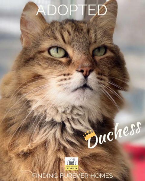 Duchess-Adopted-on-February-15-2020