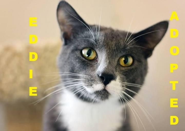 Eddie - Adopted - May 15, 2018 with Kobe