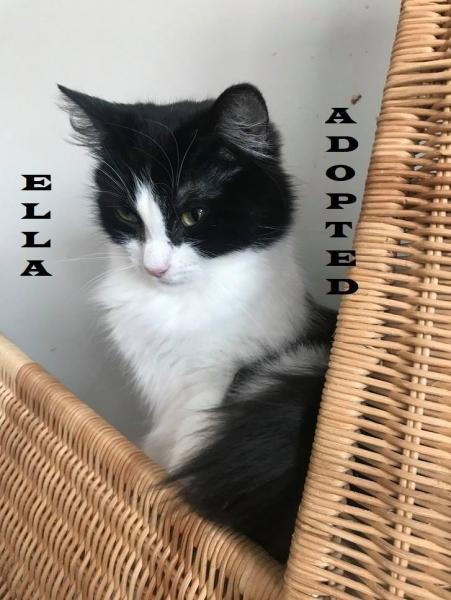 Ella - Adopted on January 14, 2019