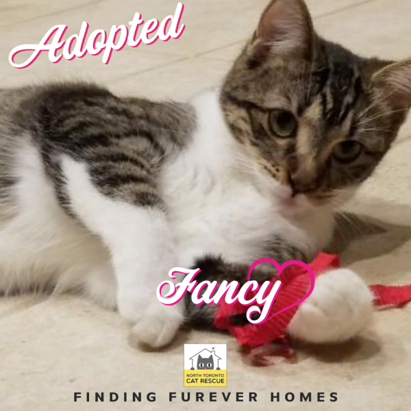Fancy-Adopted-on-April-14-2019