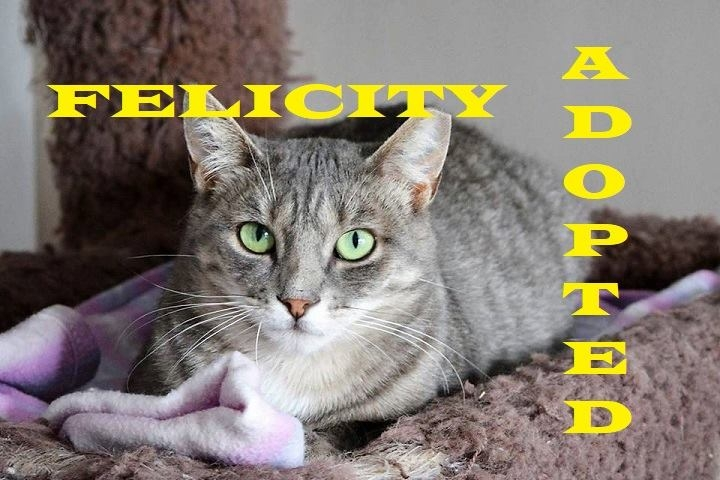 Felicity - Adopted - February 10, 2018