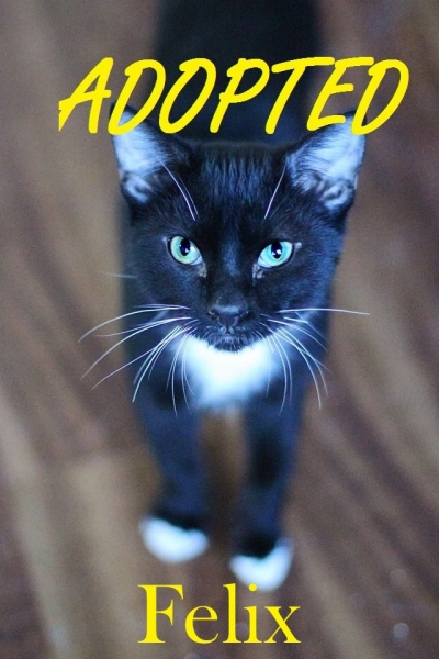 Felix - Adopted - September 30, 2017