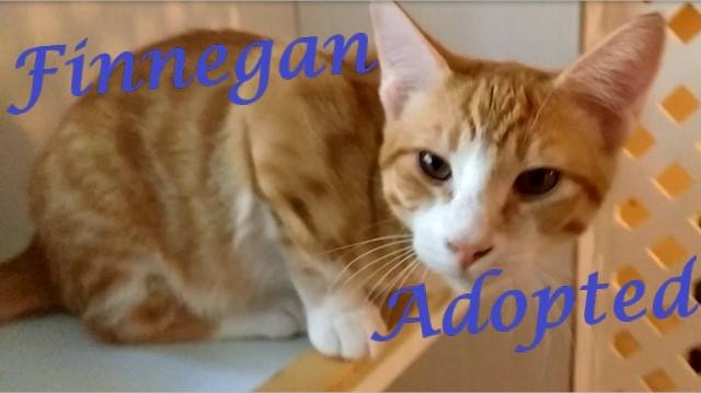 Finnegan - Adopted - August 28, 2017