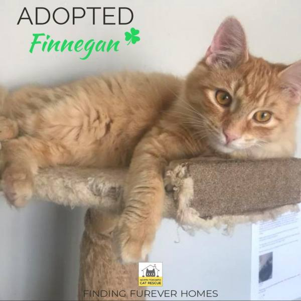 Finnegan-Adopted-on-March-1-2020