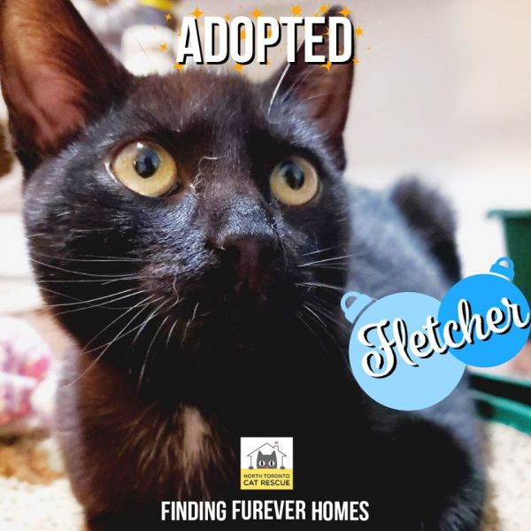 Fletcher-Adopted-on-December-21-2019-with-Chip