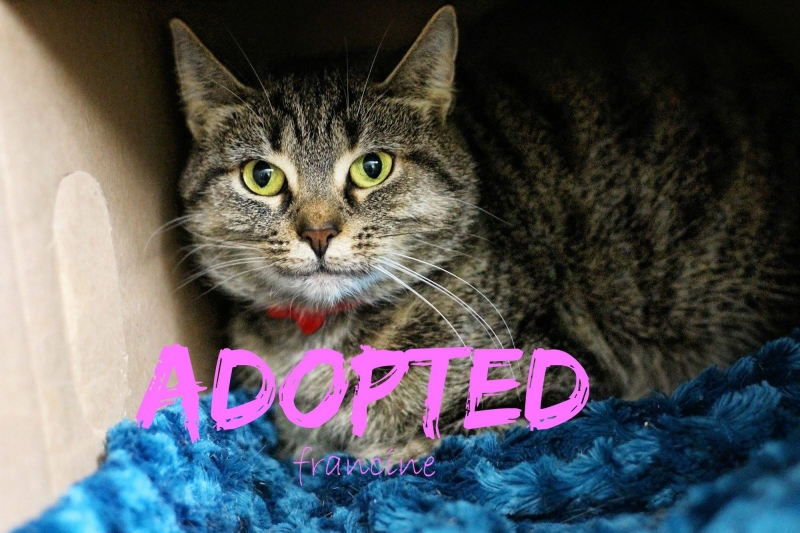 Francene - ADOPTED - March 18,2017