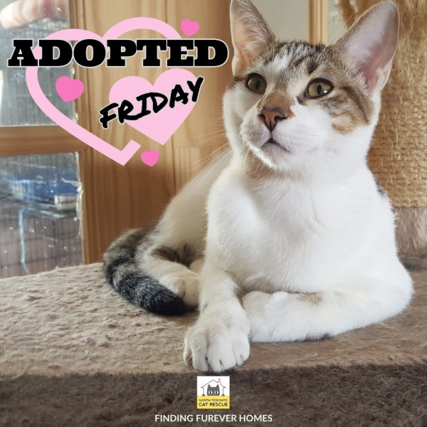 Friday-Adopted-on-June-24-2019